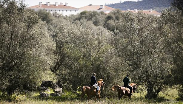 São Lourenço do Barrocal - Monsaraz Babymoon - Horses