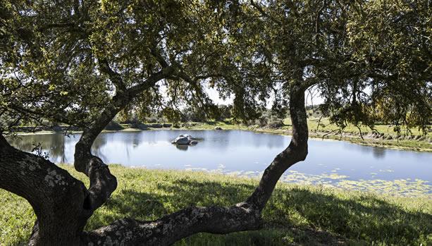 São Lourenço do Barrocal - Alentejo Babymoon - Landscape