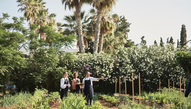 Crete Babymoon at Cretan Malia Park - Organic Garden